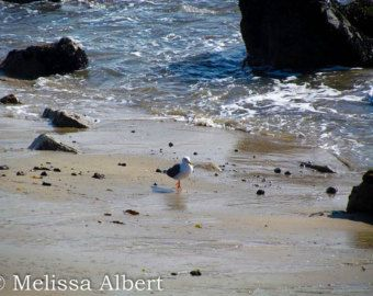 Lone Bird on the Beach