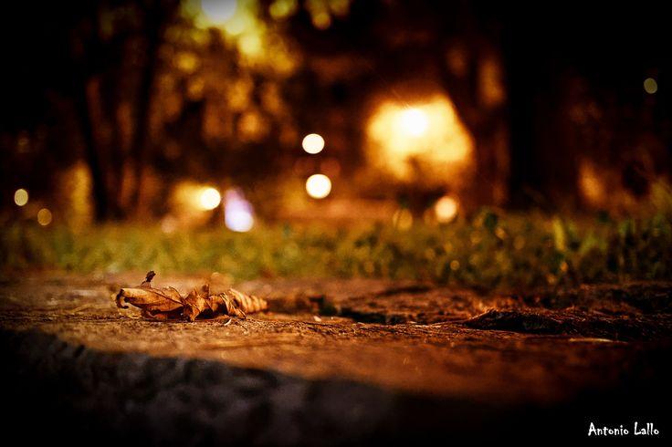 Autumn by Antonio Lallo on 500px
