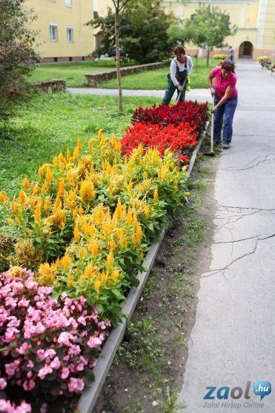 árvácska és tulipán - Google keresés