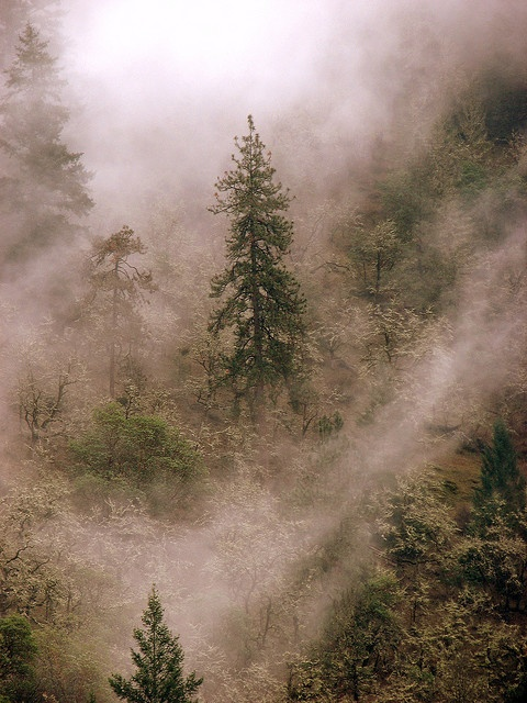The Mist by Heather_Bee, via Flickr: Mère Natural, Bees, Natural Photography, Mists, Misty Forests, Heather Be, Wooden Dreams, Photos Op, Forests Older