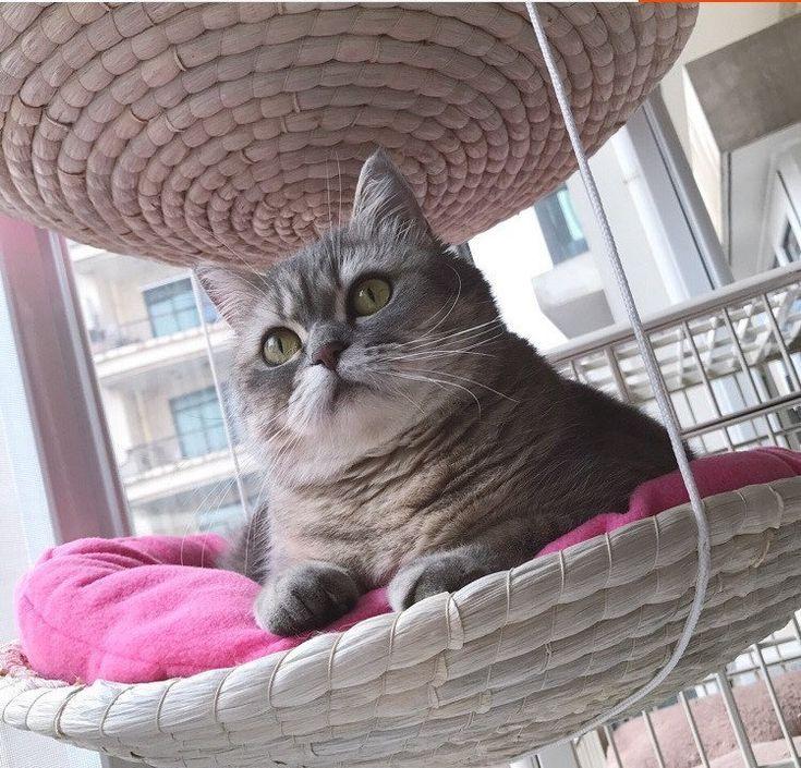 Hanging Cat Bed, Pet Furniture, Cat Tree, Indoor Outdoor
