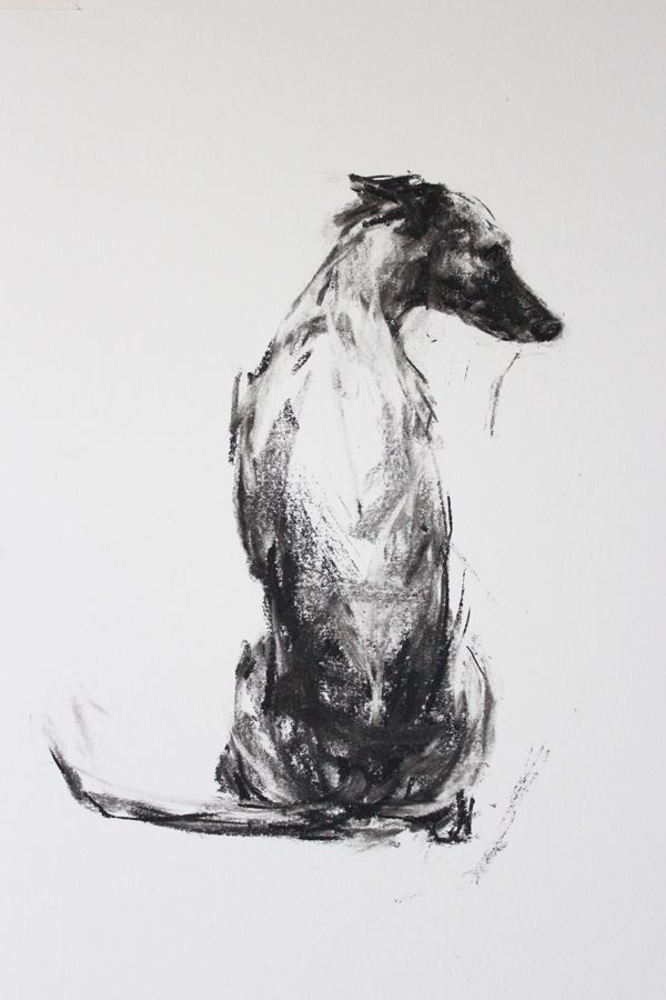 """The Sitting Whippet"" charcoal on paper by Justine Osborne"