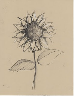 Best 25 Flower Sketches Ideas On Pinterest Illustrations Drawings And