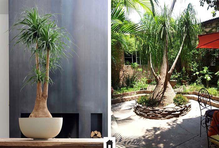 Best 25 plantas de interior resistentes ideas on - Plantas de sombra para jardin ...