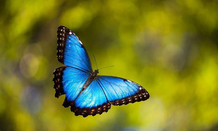 19 transformations de chenilles en papillons  2Tout2Rien