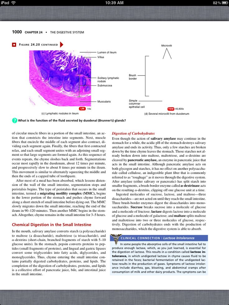 anatomy physiology digestive system essay Scientists have discovered a new organ in the digestive system  79th organ  prompted an update to the famous gray's anatomy textbook,.