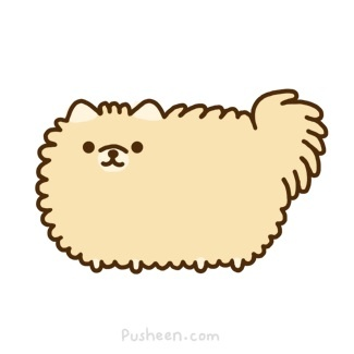 Pomeranian! hahahah this is exactly my lil fluffy nugget