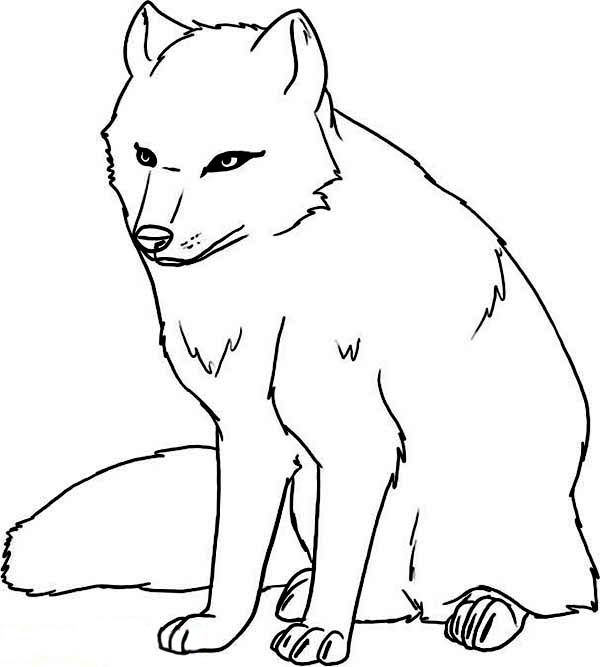 Arctic Animals Arctic Animals Cautious Arctic Wolf Coloring Page