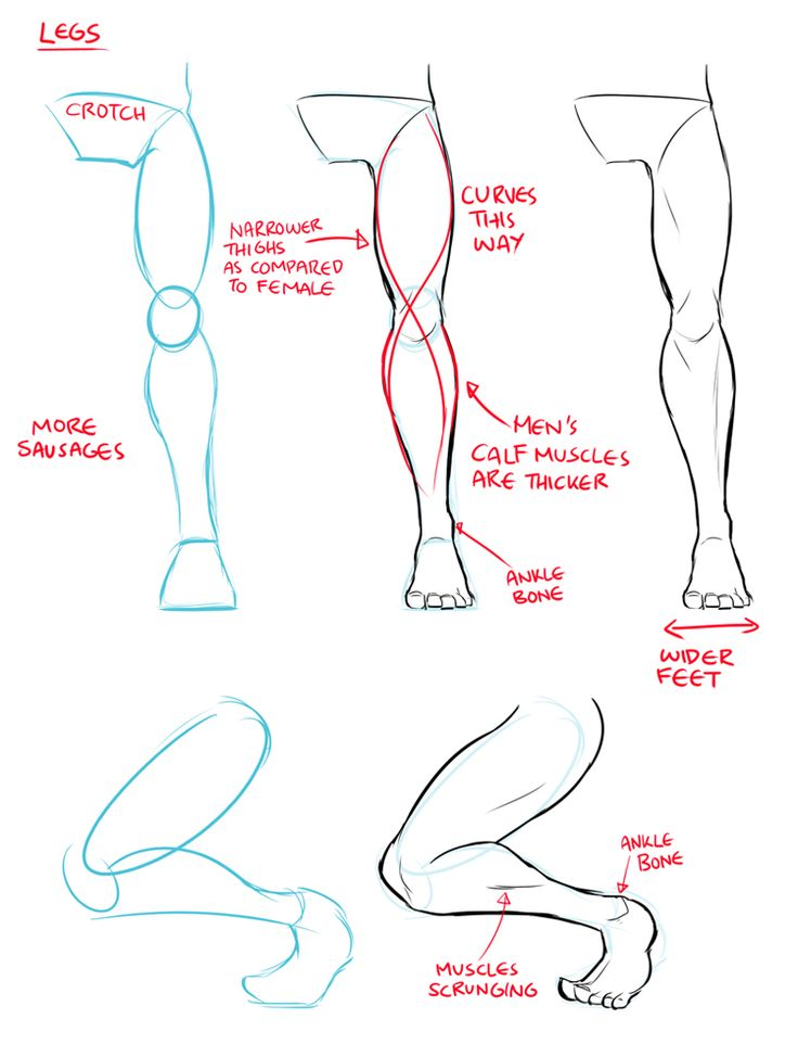 17 Best Ideas About Leg Anatomy On Pinterest Body