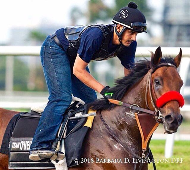 Nyquist #horses #racehorses #horseracing