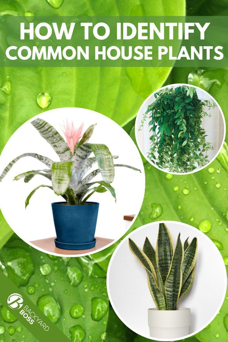 How To Identify House Plants Quickly Identify Indoor Plants In 2020 Common House Plants House Plants Plants