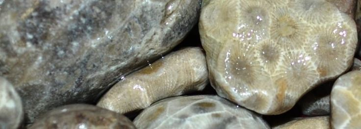 is74-1384886100-39142.jpeg. Petoskey stones, where to find