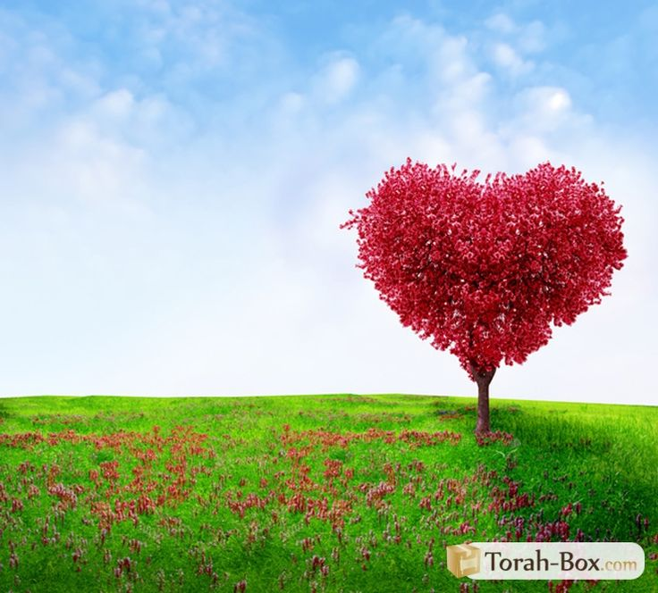 Mon fils me sollicite trop, pourtant il est marié et père de famille ! (Nathalie SEYMAN) - http://torahbox.com/GMSN