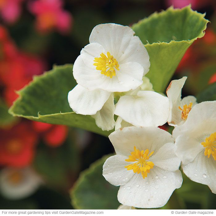 easy shade plants best 25 shade annuals ideas on pinterest plants for shady areas