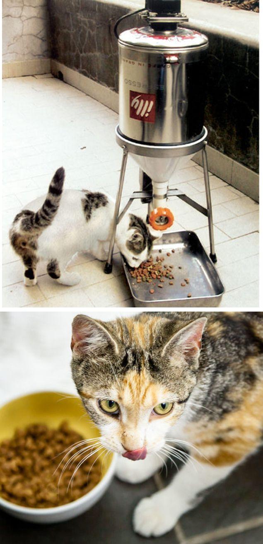 Guida illustrata per costruire un distributore di cibo per gatti TEMPORIZZATO!   #PET #ANIMALS #cats