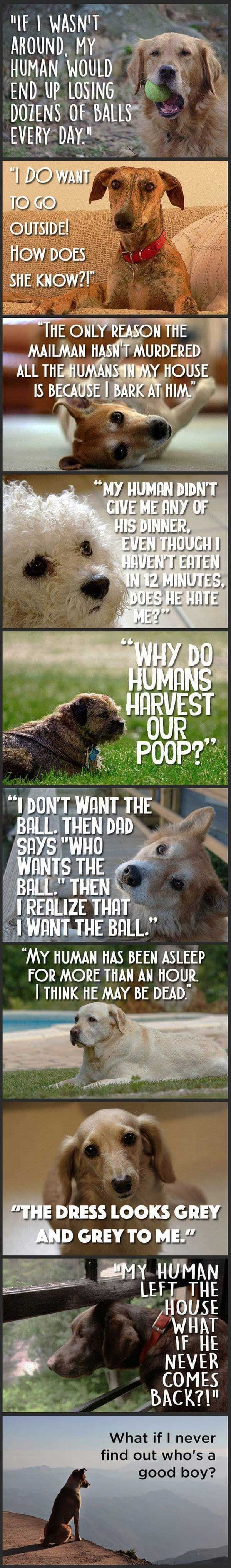 Just Dog Thoughts. #Animals #Dogs #Inspiring #Thoughts |
