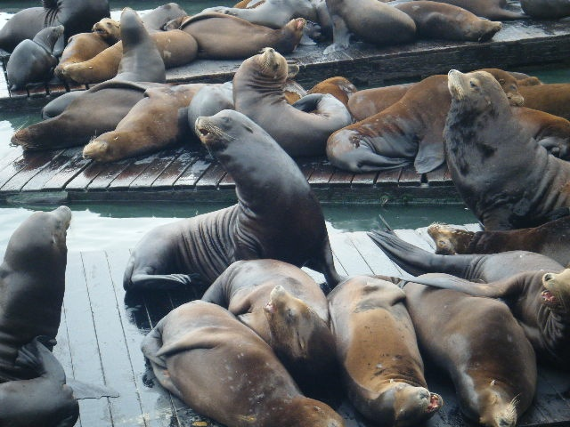 Swum with Seals, Mornington Peninsula