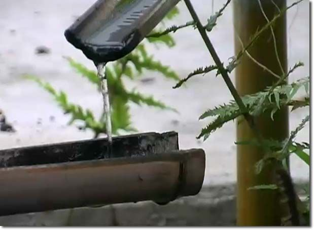 Grow bamboo to irrigate your garden without ugly and expensive pipes!