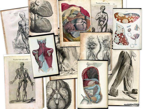 Hi Res Art DVD: Old 1500s Human BODY ANATOMY Organs Medicine Illustration Sketch Jpg via Etsy