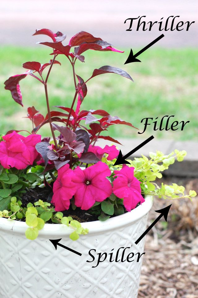 How to Arrange Pots According to Thriller Spiller Filler Technique Container PlantsPotted