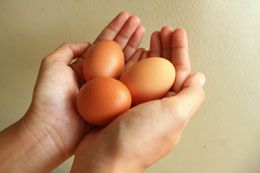 Egg White Substitutes**
