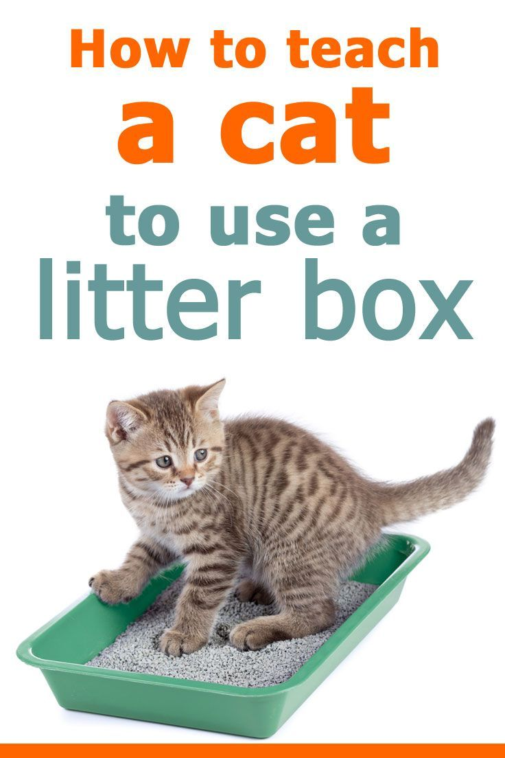How To Teach A Cat To Use A Litter Box Article By Litter Boxes Com Litterboxes Tcs Thecatsit Cat Training Litter Box Litter Box Training Kittens Litter Box