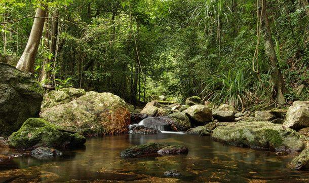 A rainforest stream in northern australia landscape for Australian rainforest