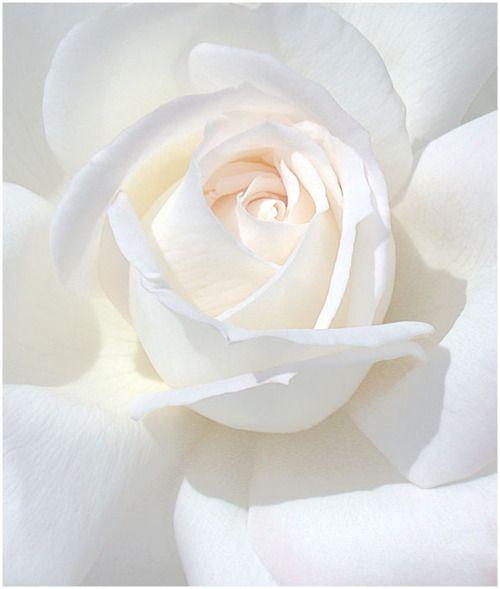 white                                                                                                                                                      More