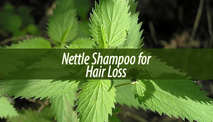We are all familiar with nettles. This stinging plant is a common ingredient in shampoos. Therefore today we will talk about nettle shampoo for hair loss.