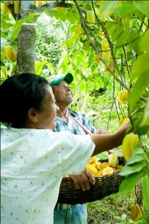 Foto 5 - Agrofloresta - Zé Caboclo - Sirinhaém