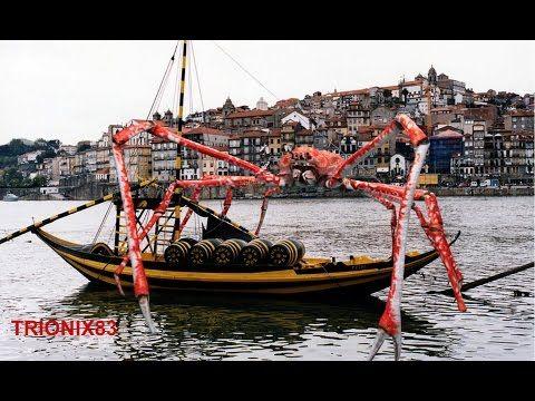 Cangrejo araña gigante Japones: Cangrejo gigante – CANGREJOS GIGANTES - YouTube