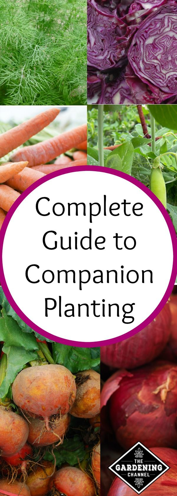 Learn which plants you should plant together in your garden to get the best crop with the least risk of pests.
