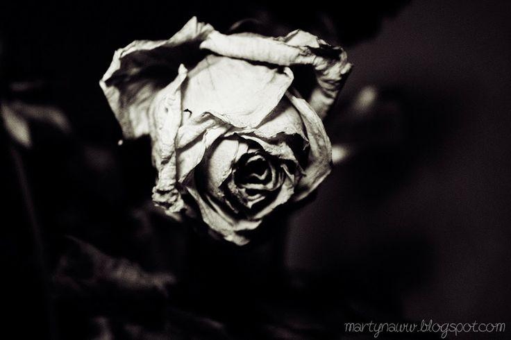 Dry Rose.