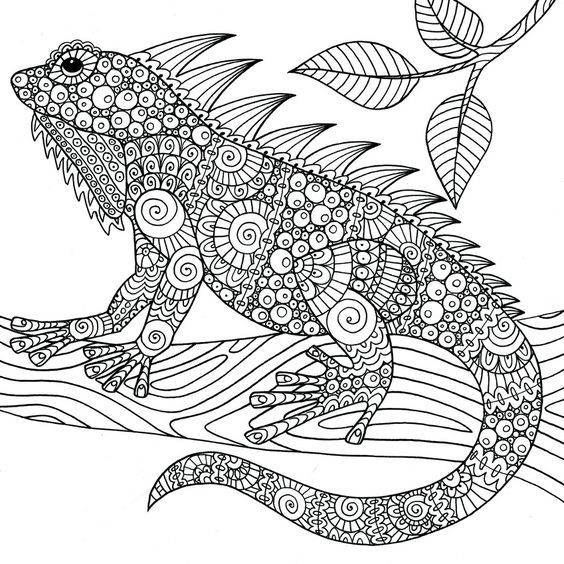 coloring pages of reptiles - 399 best animales 03 images on pinterest art print