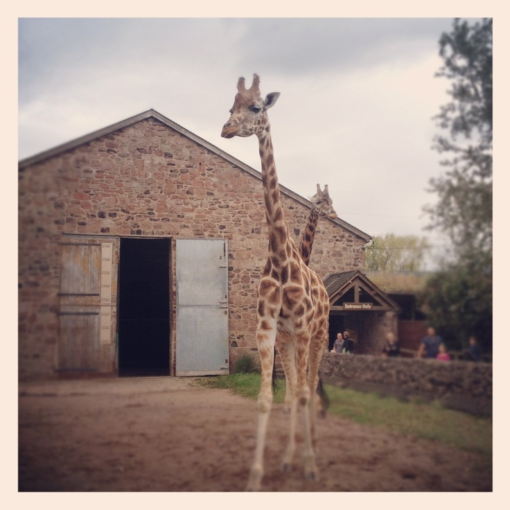 Chester Zoo.