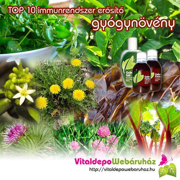 TOP 10 immunrendszer erősítő gyógynövényünk! http://vitaldepowebaruhaz.hu/top-10-immunrendszer-erosito-gyogynoveny/