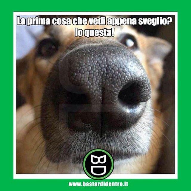 Qual è la prima cosa che vedi appena sveglio? #bastardidentro #cane #naso…