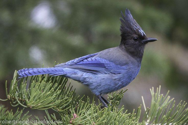 картинки птицы аляски должности
