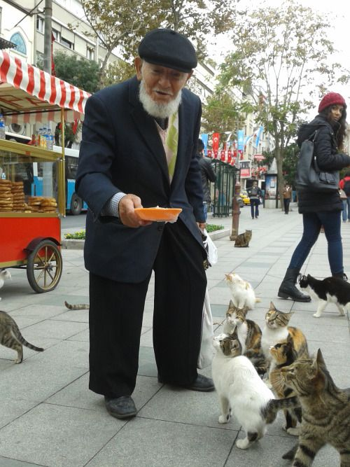captainkatu34: November 15th, 2014 - more of the feline friendly gentleman (Harbiye) For more Istanbul cat photos daily at CaptainKat34!