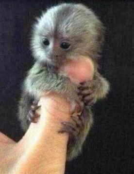 Thumb Monkey