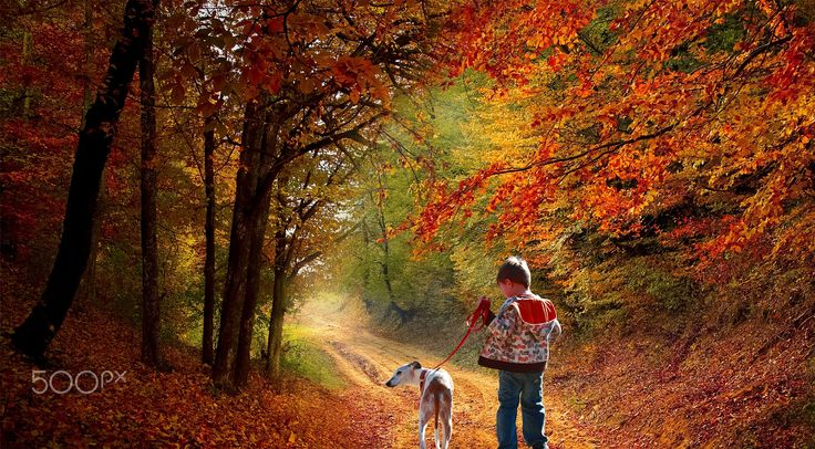 a wonderful day of autumn - null
