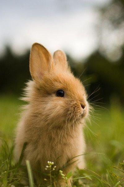 """* * """" Me beez a domestic rabbit. Wut's me be doin' outs in de wild? Too frightenin'."""" [YER HUMANS DUMPED YOU - THE BRAIN DEAD FREAKS. SEEK HELP.]"""