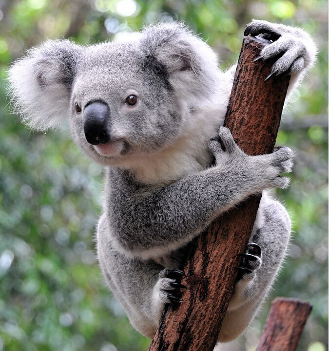 Every time I see a koala bear I think of my grandpa. I can't wait to see him in the next system holding one!