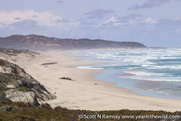 Goukamma Goukamma is situated between Buffalo Bay and Sedgefield, and offers wonderful beaches, epic sand dunes, flowing river mouths and unspoiled coastal forests