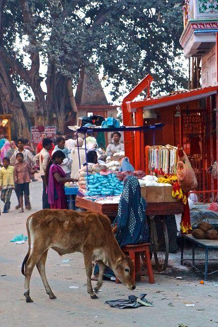 Streets of Varanasi, India