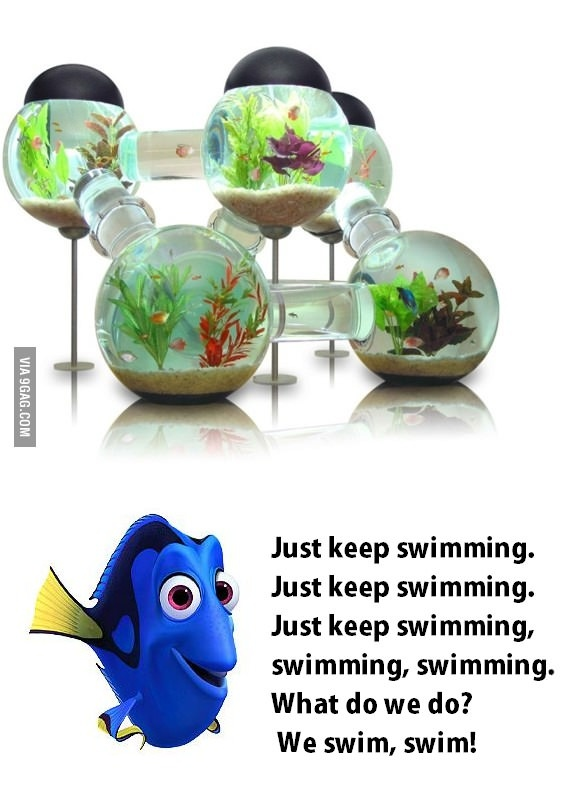 17 best images about tanked on pinterest toilets for Labyrinth fish tank