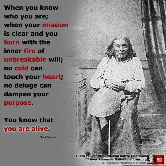 Indian Quotes Mesmerizing 1450 Best Native American Quotesprayers And Wisdom Images On . Decorating Inspiration