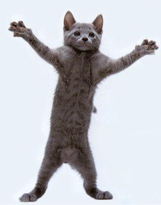 Смешные картинки и фотографии про животных и их смешные мордочках