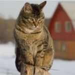 Alley Cat Allies offers tips to help keep cats safe and healthy outdoors during the winter months.