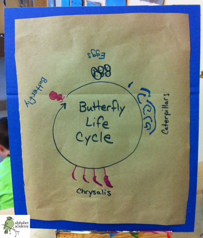 Our Butterfly LIfe Cycle! We have been studying life cycles while watching our frogs and butterflies grow. During morning meeting, we illustrated and labeled this life cycle as a group. — Alphabet Academy North Kindergarten http://thealphabetacademy.com #reggio-inspired #butterfly #frog #life #cycle #lifecycle #collaboration #kindergarten